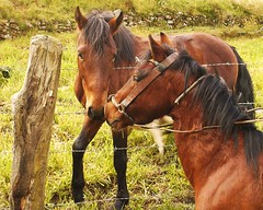 No son panas (Clod) Tags: horses animals caballos species animales especies