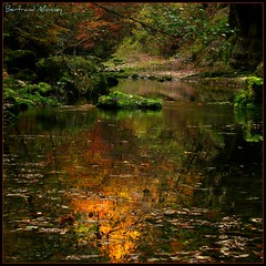 reflet  d'or...........................................Les Clees Gorges de L' Orbe  (1D110) Tags: blue portrait 3 hot nature fleur yellow vertical horizontal montagne alpes pose de rouge 1 landscapes search eau europe village suisse post image horizon explorer group cook award coke grand icon x lausanne bleu explore lumiere contraste mineral imagine histoire paysage bertrand blanc soe paysages couleur gros jeu montagnes  longues vaud jeux monney 500x500 bsquare equilibre minral tto avision oulens espoire photographersgonewild vision100 vosplusbellesphotos 1d110 lesamisdupetitprince thatre