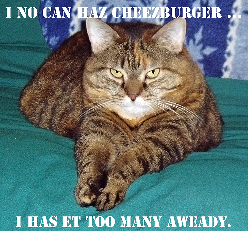 No Can Haz Cheezburger