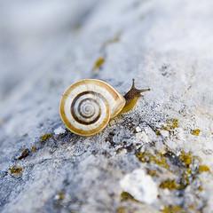 Goian (Joxefe Diaz de Tuesta) Tags: canon snail escargot caracol barraskiloa josefelixdiazdetuesta atauri famoussquarecaptures