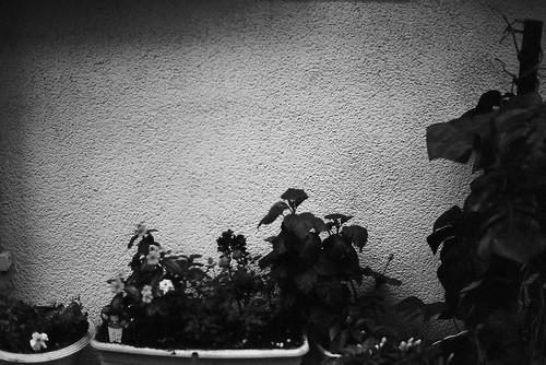 niigata monochrome film 2