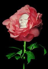Usugrow Rebel Ink (hello-d) Tags: pink urban flower art rose japan ink toys rebel tokyo designer secret vinyl tatoo base shifty kaiju artoyz secretbase usugrow rebelink