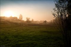 Foggy sunrise (Lucas Janin | www.lucasjanin.com) Tags: california usa plant color green grass fog sunrise plante landscape iso200 nikon vert getty 24mm nikkor paysage f11 brouillard gettyimages herbe ukiah lightroom redwoodvalley nikond700 lucasjanin afsnikkor2470mmf28ged sec