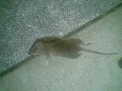 Dead Mouse, GWU
