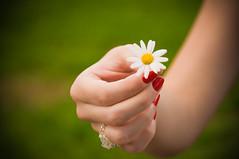 Little details can change your humor. (Ale Marques Fotografia) Tags: red white flower brasil nikon hand bokeh flor nails paulo vermelha são mão branca anel unha d300 atibaia esmalte