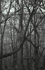 urban woods (peterkend) Tags: wood urban bw tree woods fuji witch telephoto nikkor urbanwoods 80200mm28 s5pro petermarik marikpeter
