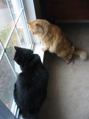 Huggy Bear and Jasper squirrel watching out front