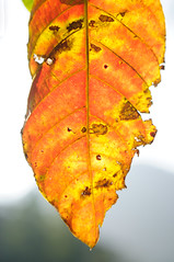 A piece of a broken yellow leaf