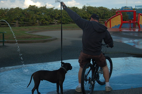 vancouver bike dude w dog 1