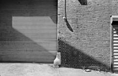 (andre dos santos) Tags: nyc newyorkcity blackandwhite newyork 120 film mediumformat fuji 33 rangefinder queens 400 hunterspoint diafine fujifilm 6x9 medium format neopan neopan400 fujica longislandcity 100m f35 ei600 g690bl fujinons pushonehalfstop