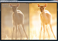 lightroom tutorial (andrew evans.) Tags: 3 nikon before after f28 d3 settings lightroom 400mm