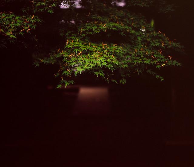 葉先のスポットライト