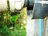 Musgo (Rafinha Shinta1) Tags: musgo verde planta praia café animal água mar do maria natureza flor bonito chuva paisagem céu vermelho fruta abelha dourado amarelo libelula peixe inseto ave borboleta cachorro basset macaco quarto nublado prédio sapo oriental decoração lagarto narigudo filhote libélula mosca bolacha horizonte siri ondas coqueiro joaninha papagaio lata arara prata aranha canário grão taturana bugio carangueijo gafanhoto gaiola besouro bichinho pólem mariafedida tesourinha vira enguia fedida siriri