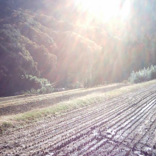 【写真】藤原家住宅のすぐ下に広がる畑
