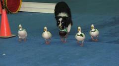 Dog Show 050 (2)