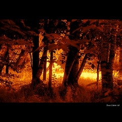 Spirit of the Light in my wild forest...!!! Esprit de la Lumière dans ma forêt sauvage...!!!