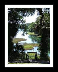 The View (Bonnie Almeida) Tags: nature silhouette river florida scenic torquoise rainbowsprings