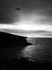 Evening Port Isaac