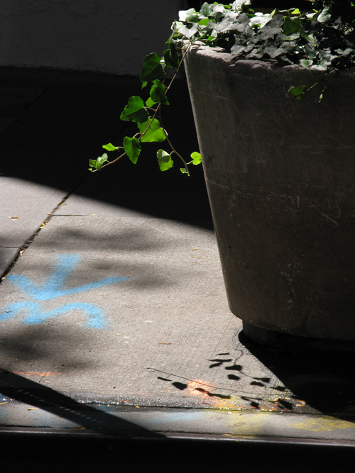 leaves of a sidewalk planter in the sunlight, Manhattan, NYC