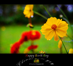 Happy Birthday To You (Thushan Sanjeewa) Tags: birthday summer love bravo happybirthday bday lover magicdonkey valantine thushan saveearth aplusphoto flowerwatcher theperfectphotographer flowersmacroworld excellentsflowers mimamorflowers awesomeblossoms tsanjeewa thushansanjeewa