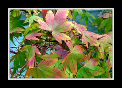 Changing seasons...Changing Colours ( Katie ann. Off more than on.) Tags: blueribbon naturesfinest autumnfall supershot supershots impressedbeauty impressedbyyourbeauty citrit brillianteyejewel