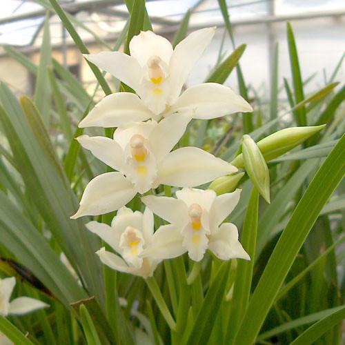 Floriferous #1