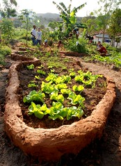 HORTA MANDALA (F Freire) Tags: brazil brasil children bahia crianas permaculture ecologia sade organicfood permacultura brsil fernandafreire ecoliteracy aliementao diaadiabrasileiro ecoalfabetizao projetoecosocial