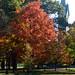 Foliage at Bowdoin University