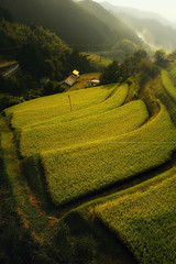 Rice Terraces of the late afternoon (HarQ Photography) Tags: japan sony nara a700 asukamuravillage