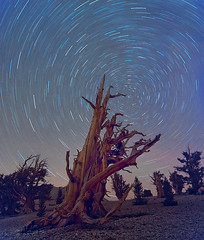 Full Star Trails Bristlecone (kevin mcneal) Tags: california mountains sierras bishop easternsierras