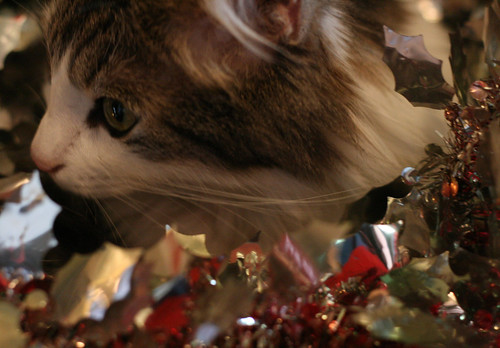 rudyard loves christmas
