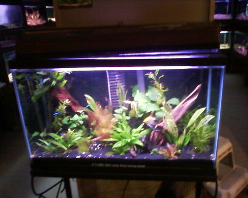 29 Gallon Amp 40 Gallon Displays Pics