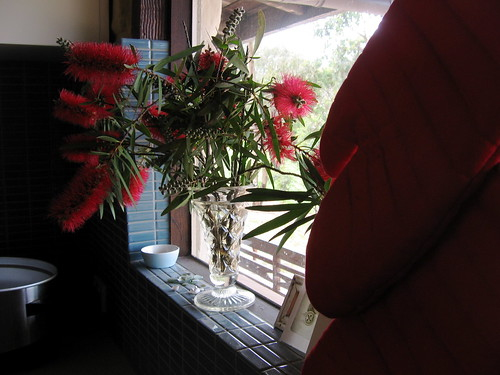 new red oven gloves and callistemon flowers