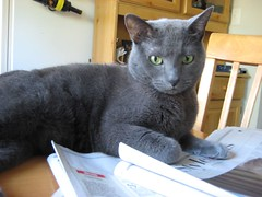 Picture 054 (khami6cr) Tags: gus graycat guster