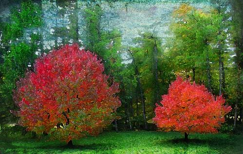 Autumn Impression by bossbob50 -.