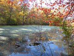 Swampy (backfirecptn) Tags: autumn reflection tree fall nature water reflect swamp naturesfinest