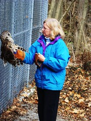 Cindy and rehab barred owl