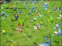 'Round And 'Round (suavehouse113) Tags: beaconsfield green grass wind recycled australia spinning pinwheel fremantle freo westernaustralia kitefestival fringefestival whirligig artsandcrafts plasticbottle creativereuse fremantlefestival kitefair southfremantleseniorhighschool