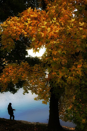 An Angler in Autumn