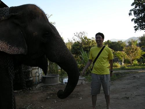 เล่นกับพี่ช้าง