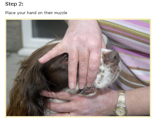 Các bước cơ bản đánh răng trên chó - bước 2.