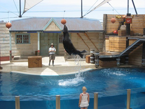 Jumping Seal!