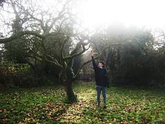 Adam's Apples Dec08 012 (Katherine Claro) Tags: adamsapple