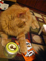 Jasper claims the orange Temptations and the catnip