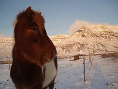 How about like this? (Jaana-Marja) Tags: sky horse snow mountains iceland esja dragondaggerphoto