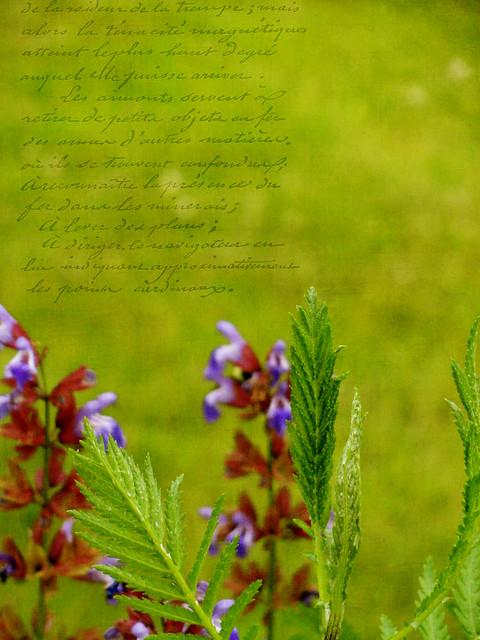 Garden Scene with french script