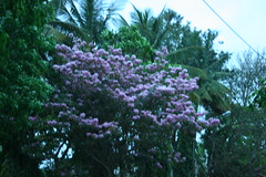 Spring Colors near Ulsoor lake (Swami Stream) Tags: morning india lake canon landscape rebel walk bangalore karnataka swami banaglore ulsoor ulsoorlake bengaluru xti swamistream swamistreamcom