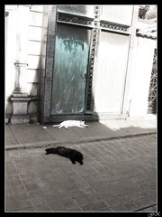 Gatos de Recoleta (LordGK) Tags: door light sleeping shadow color graveyard cat buenosaires cementerio tomb recoleta melancholy
