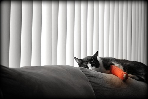 broken kitty dreams