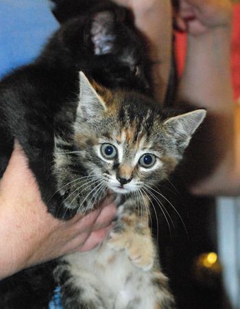 Fist Full of Kittens... PAD #1146